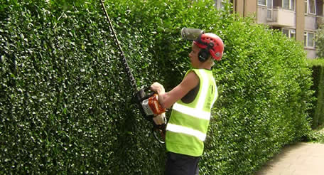 Image result for benefits of hedge trimming